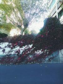 wall creeper plant nature